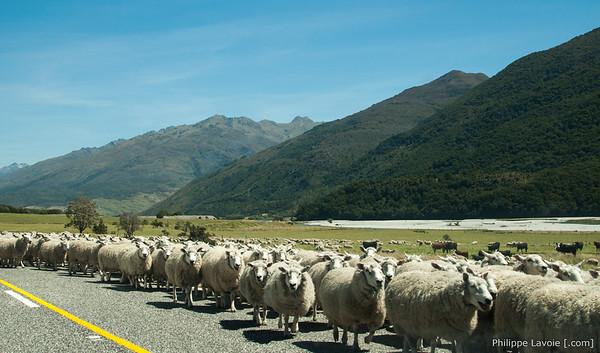 Nouvelle-Zélande 2015