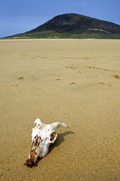 Goat Skull - Ceapabhal, Isle of Harris, Scotland, UK - May 22, 1989