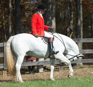 Montpellier Hunt  Races  2011 to 2015