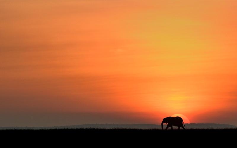 Elephant-sunrise-masaimara-africa.jpg