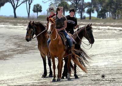 Marsh Tacky Horses