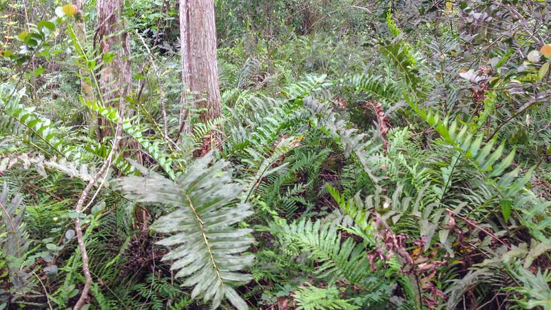 Doris Davis Foreman Wilderness