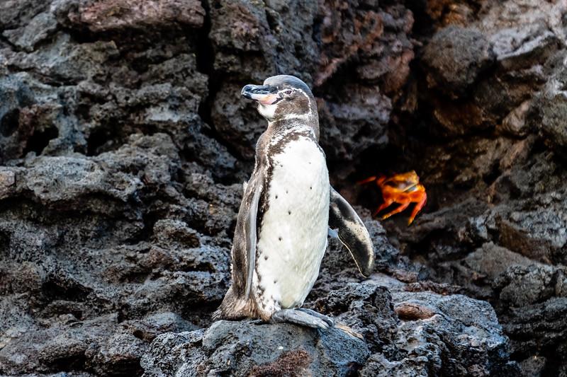 Galapagos-3635.jpg