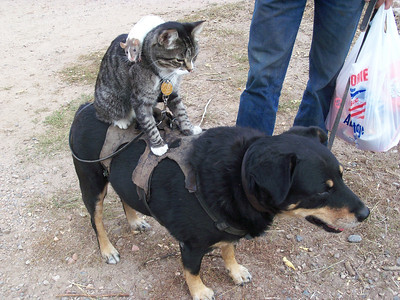 Funny animal pix