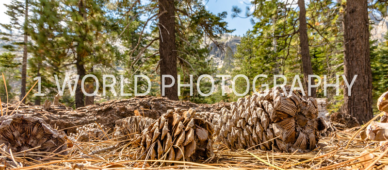 San Fran_Lake Tahoe Trip 2017-1358-75.jpg