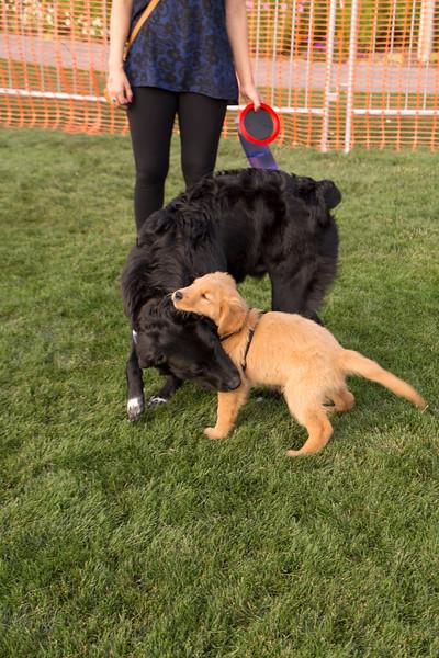 DogDays_Dogs_Gardens_2015_IMG_5483.jpg