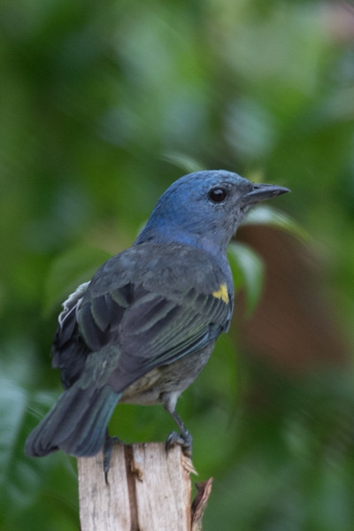 19-Sept Brazil Birds-7786.JPG