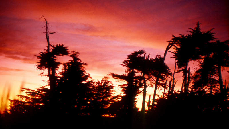 *Trees-sunset-SeaRanch.jpg