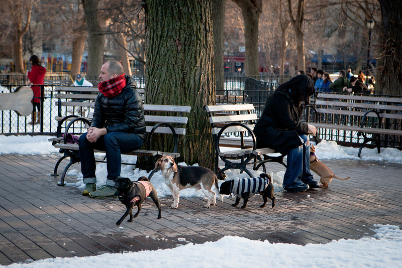 Dogs play at the Tompkins Square Dog Run. And these pups are quite fashionable too...