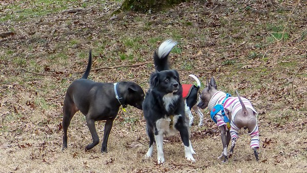 2019-01-02 Scout, Oreo, Alfie, and Morgan