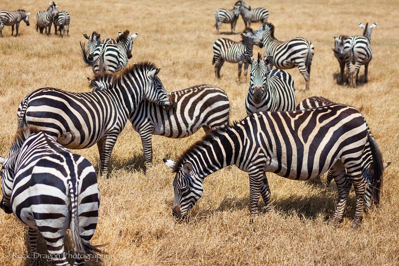 Ngorongoro-48.jpg