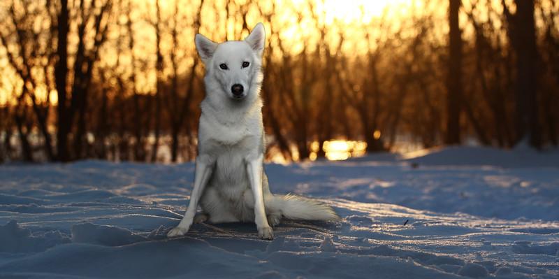 Husky-9.jpg