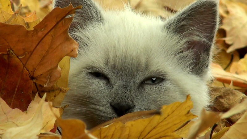 kitten_leaves_10_nowhite.mov