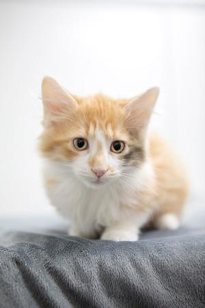 fluffly-orange-white