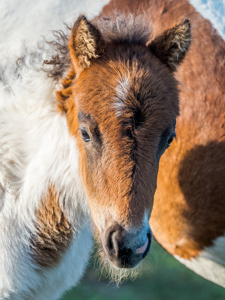 229 Jun 15 2019 Grayson Highland foal-1.jpg