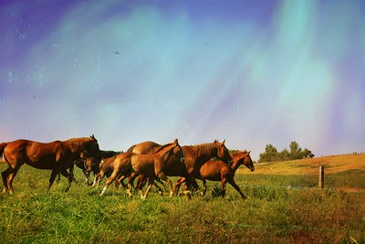 Bonina Ranch 2017