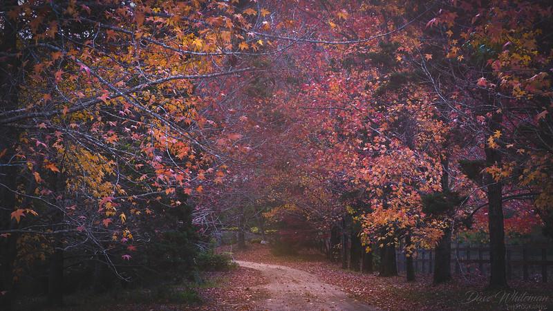 Sams Way in Autumn