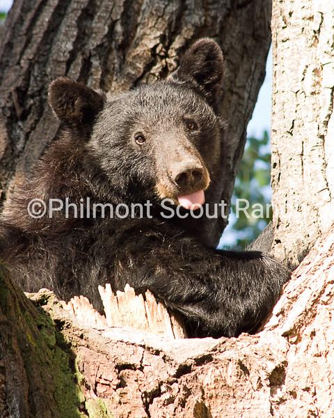 1st_2014_Wildlife_JessByam_Sassy Bear_PTC_963.JPG