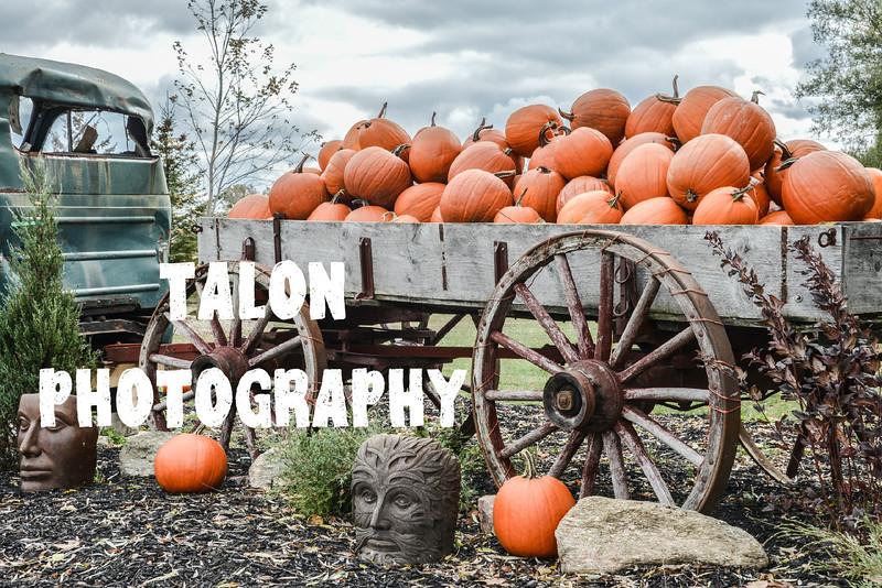 KT pumpkin.jpg