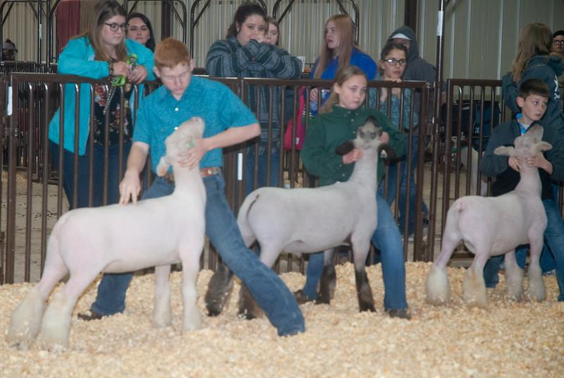 kay_county_showdown_sheep_20191207-103.jpg