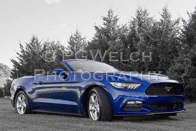 2015 Mustang - Cindy Toney