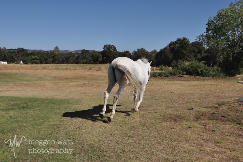 EB&Horses-073.jpg