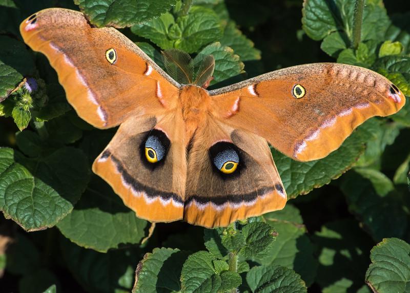 moth (1 of 1).jpg