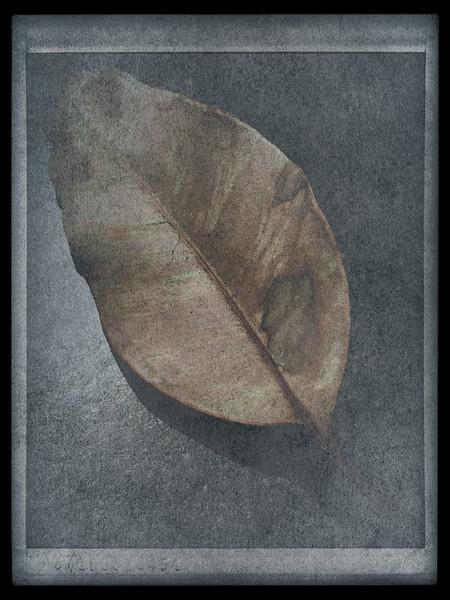 Leaf Variations