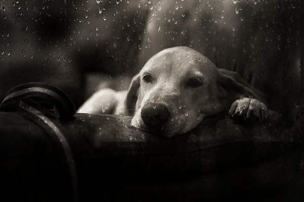 Rainy Day dog