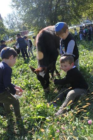 Parshas Noach-Petting Zoo