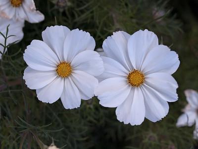 Fairbanks Flowers  Plants etc