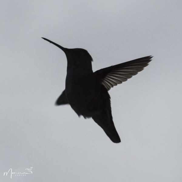 2021 - The Hummingbird Chronicles-0875_edit.jpg