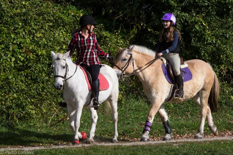 Equestrian Colour Coordination