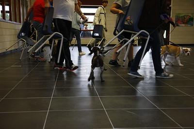 2013_08_16_Eerste_puppyles