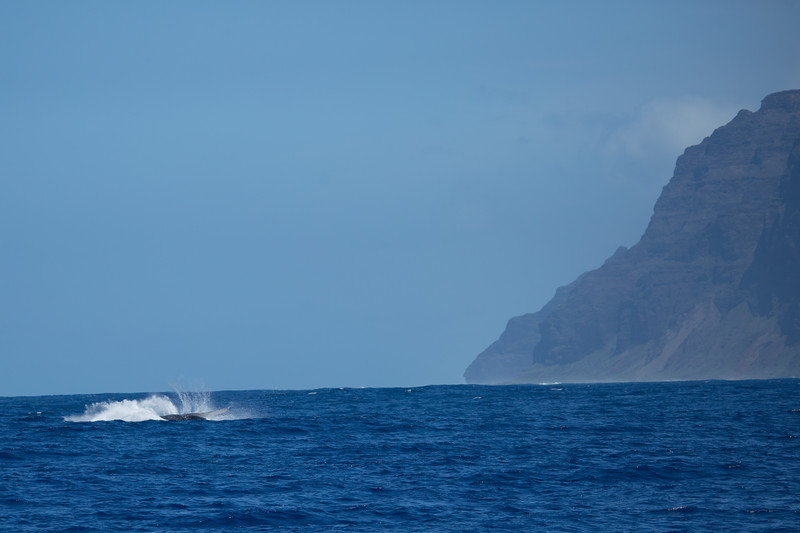 whales-leila-51.jpg