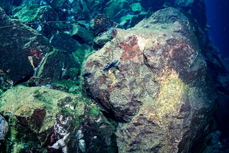 2014 Whale Shark - Cave Adventure-119.jpg