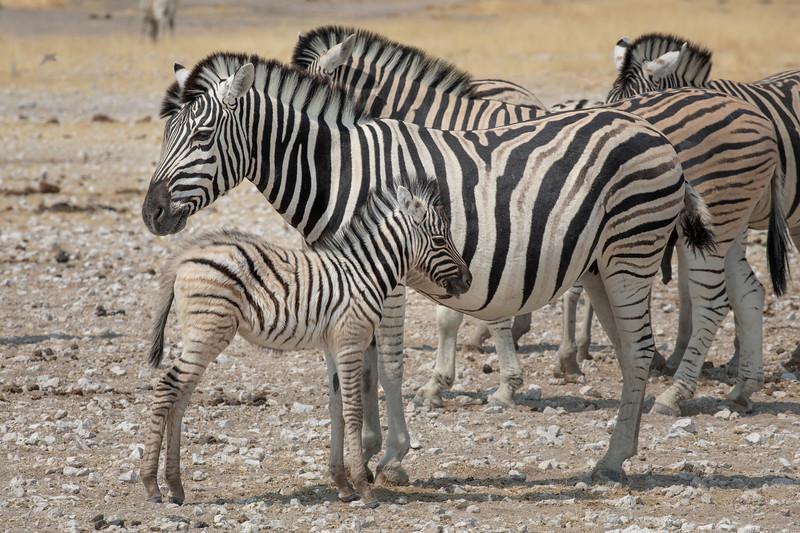 Namibia 69A9264.jpg