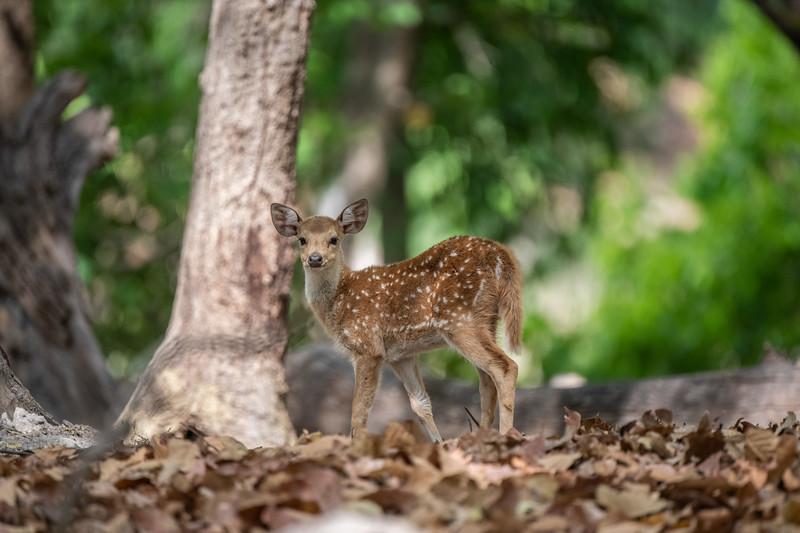 India_April_2019-2292.jpg
