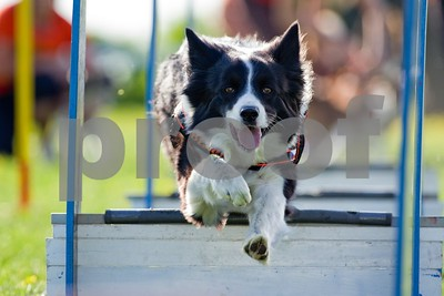 dog-obedience-and-agility-training-exercise-the-body-and-mind