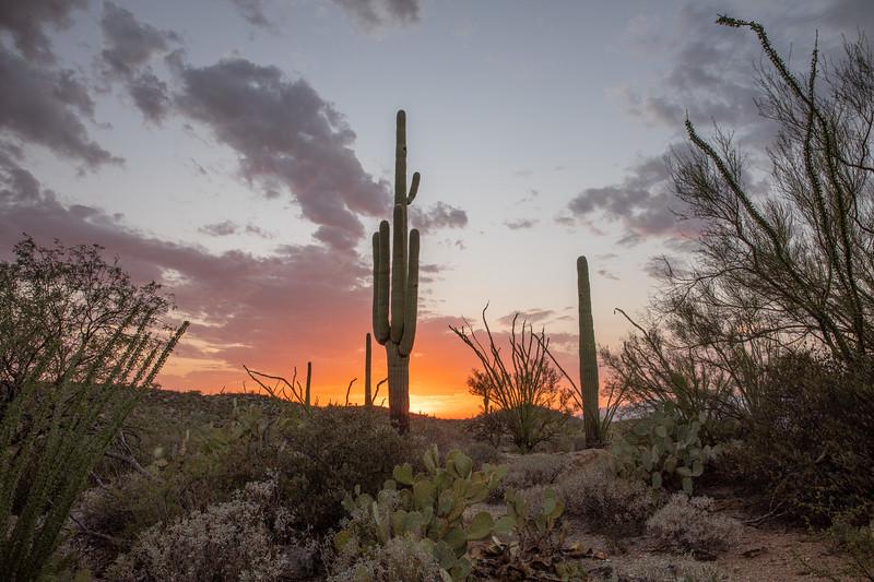 WVWS_Saguaro Cactus-4443.jpg
