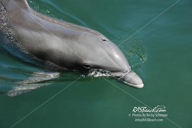 Dolphin_2
