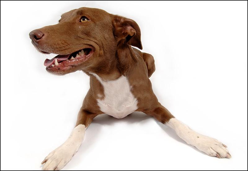 Dog on white backround
