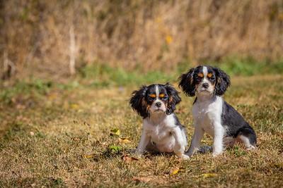 Daisy & Gracie