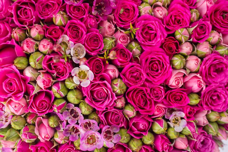Pink Bed of flowersAdobeStock_61659939.png