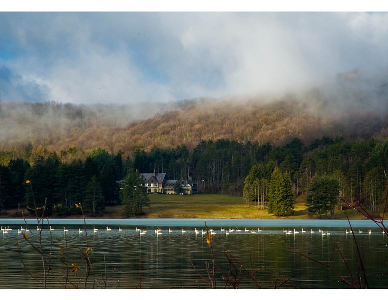 Allegany large12 swans.jpg