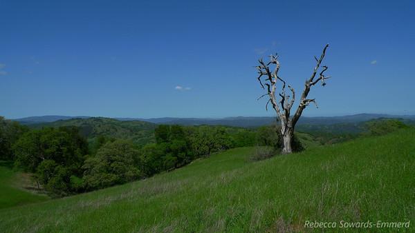 Henry Coe Trifecta: Rock Springs, Vasquez, and Wilson Peaks (04.28.2012)