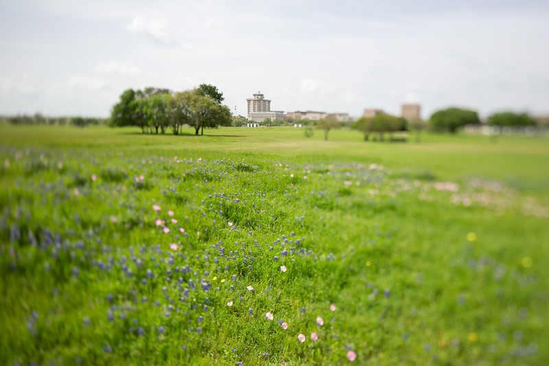 2019 Campus Bluebonnets_1675.jpg