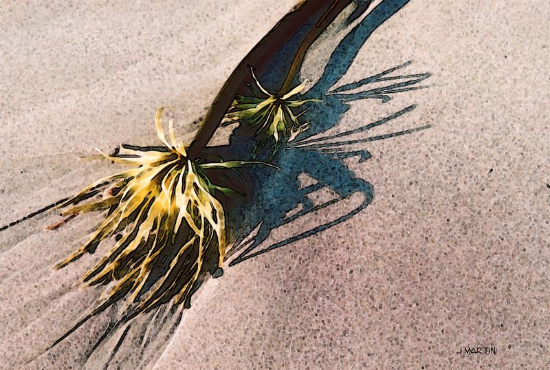 beach garden 2  11-16-2008.jpg