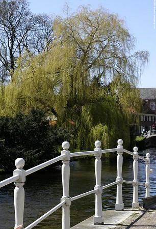 Leiden - Hortus Botanicus revisited