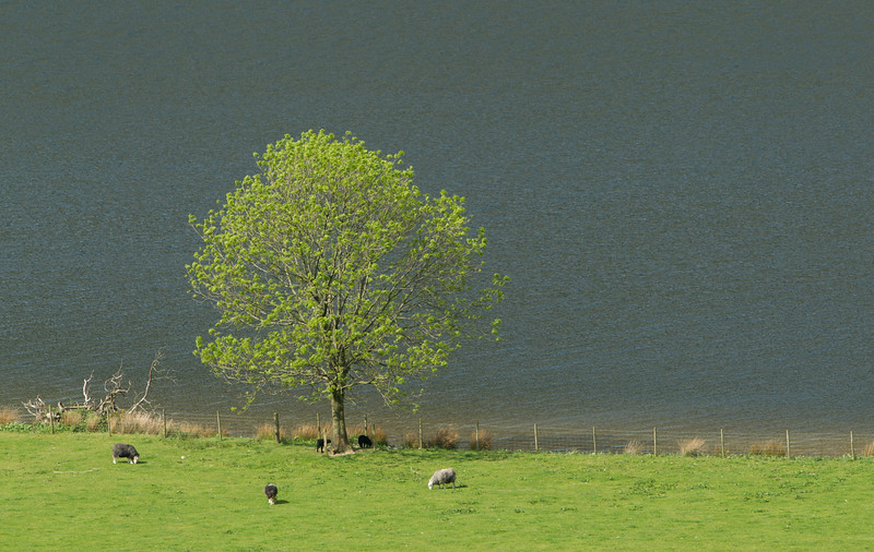 Spring by Crummock Water